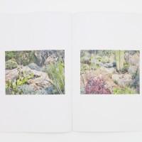felicia-atkinson-ambient-park